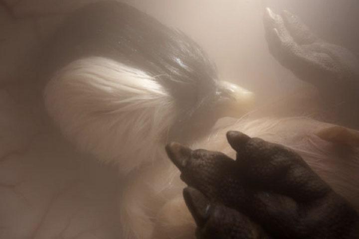 Penguin - Imgur