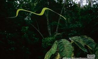 Cómo vuela una serpiente