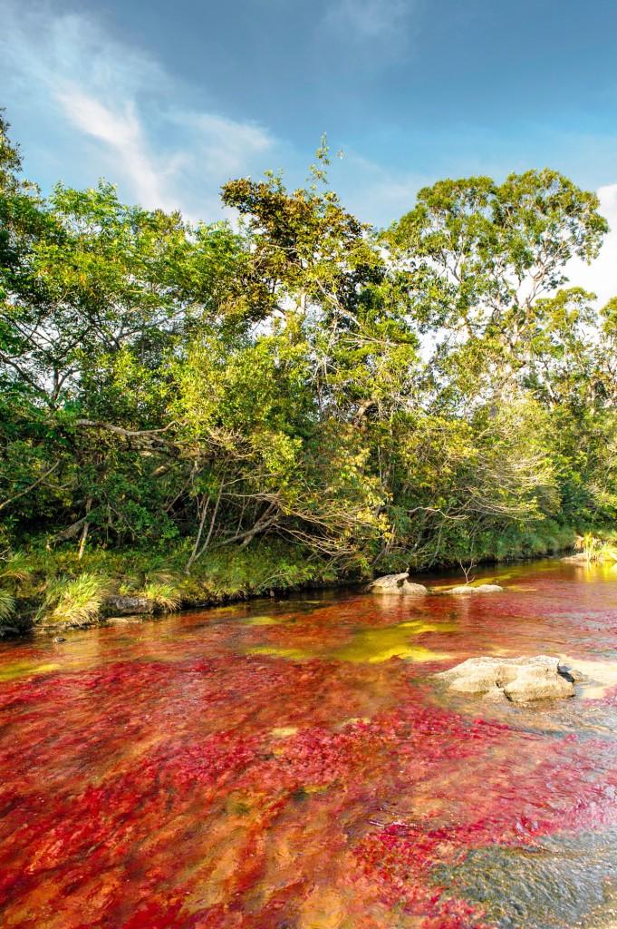 Cano-Cristales-Colombia-el-Tapete-Rojo