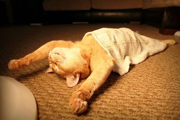 imagenes-de-gatos-durmiendo-1