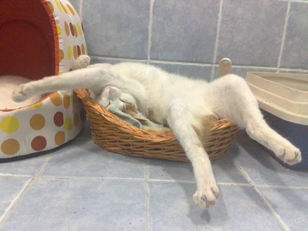 imagenes-de-gatos-durmiendo-10