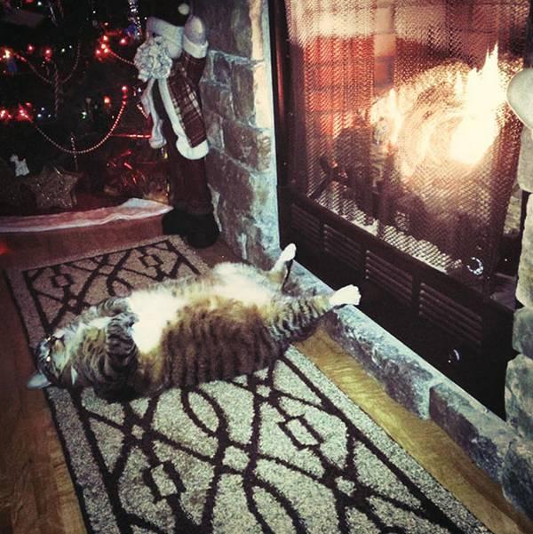 imagenes-de-gatos-durmiendo-13