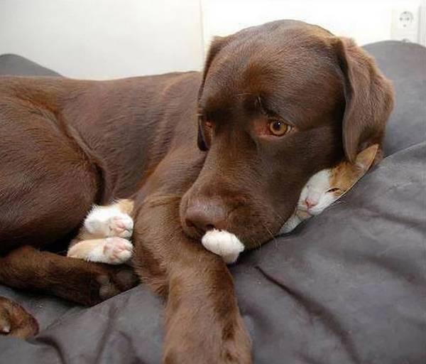 imagenes-de-gatos-durmiendo-14