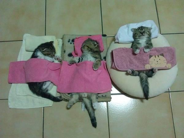 imagenes-de-gatos-durmiendo-16
