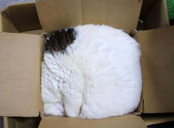 imagenes-de-gatos-durmiendo-19