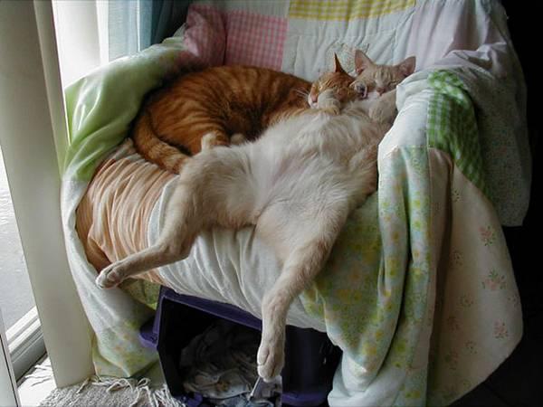 imagenes-de-gatos-durmiendo-20