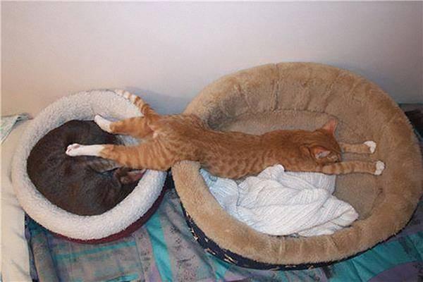 imagenes-de-gatos-durmiendo-26