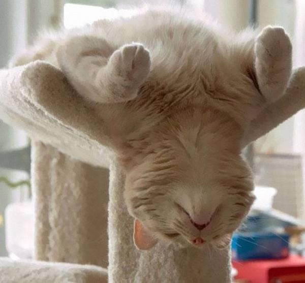 imagenes-de-gatos-durmiendo-27