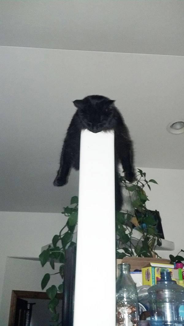 imagenes-de-gatos-durmiendo-29