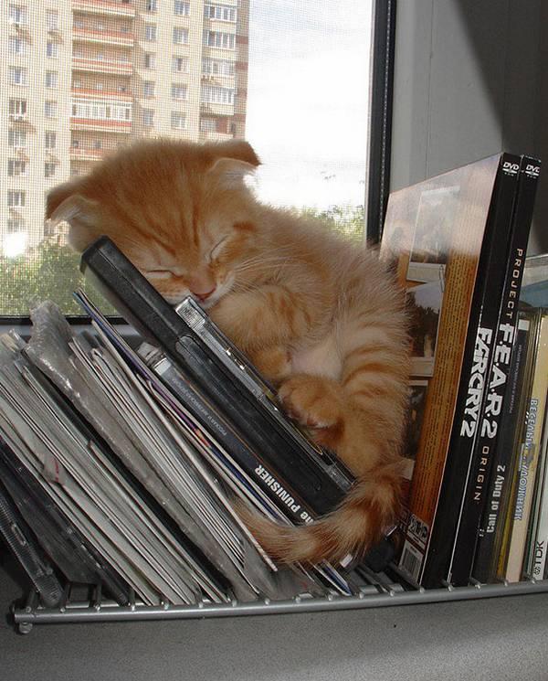 imagenes-de-gatos-durmiendo-5