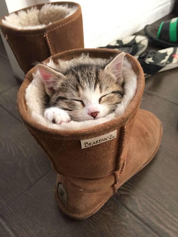 imagenes-de-gatos-durmiendo-6