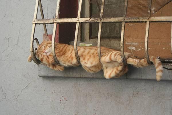 imagenes-de-gatos-durmiendo-7