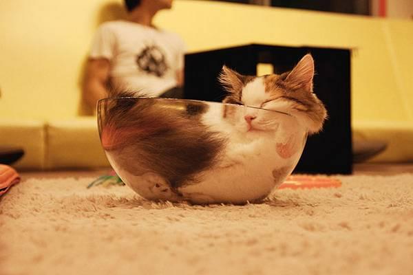 imagenes-de-gatos-durmiendo-8