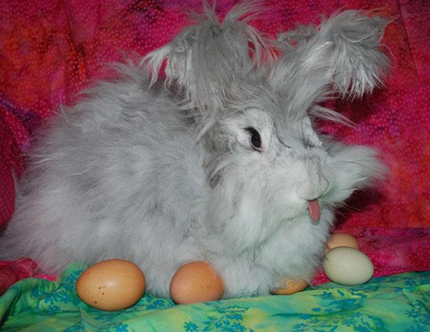 cute-bunnies-tongues-20