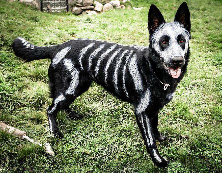 mascota halloween