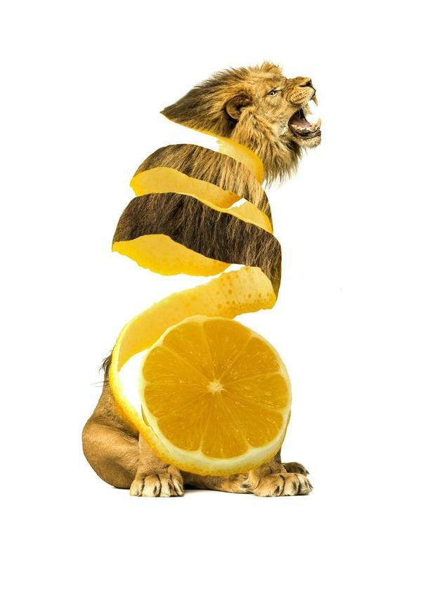 animales alimentos7