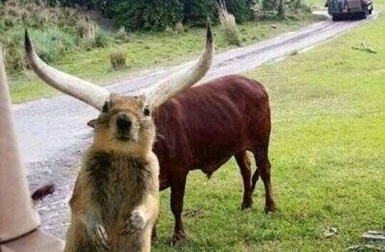 a.baa-animals-love-to-photobomb-to