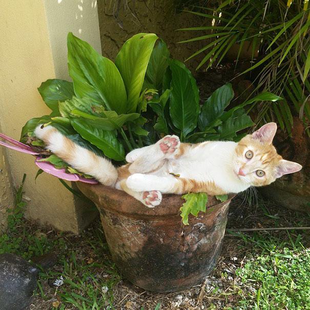 XX-Cat-Plants3__605