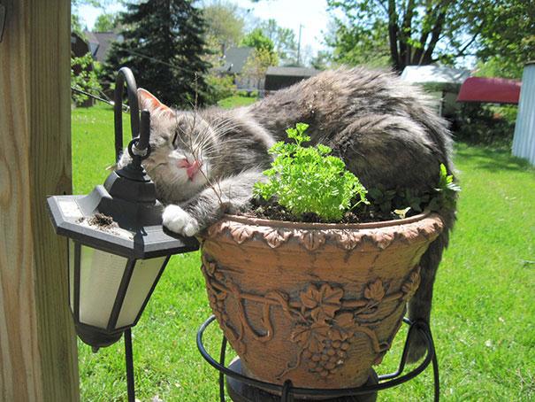 cat-in-flowerpot-12__605