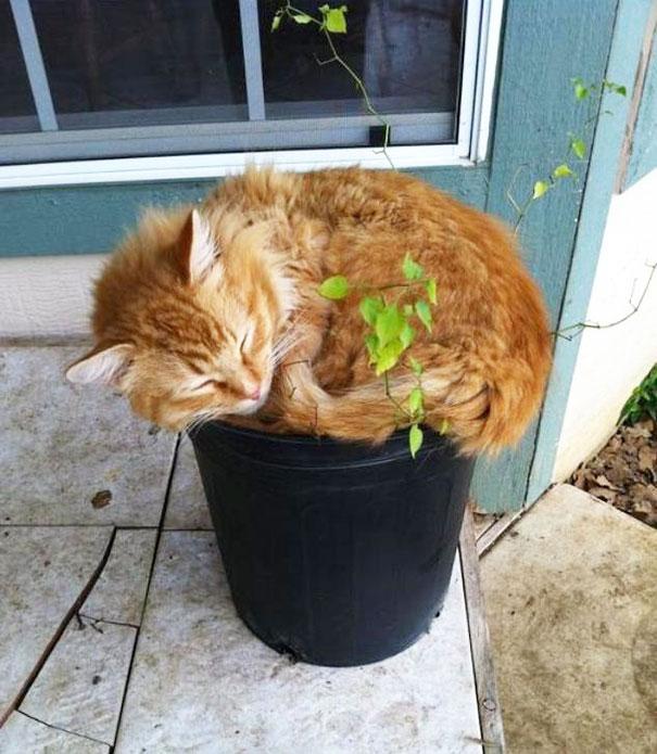 cat-in-flowerpot-2__605