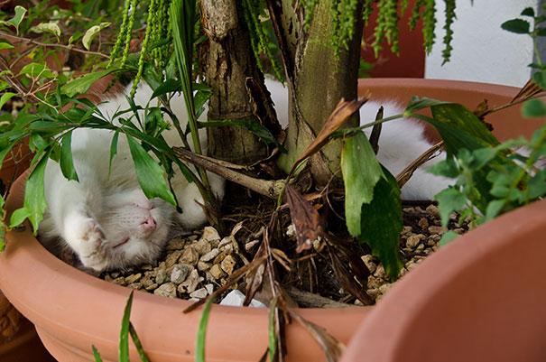 cat-in-flowerpot-32__605