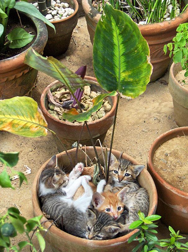 cat-in-flowerpot-35__605