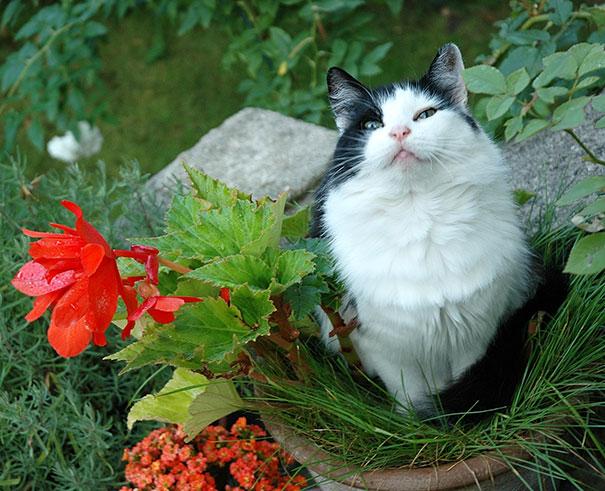 cat-in-flowerpot-36__605