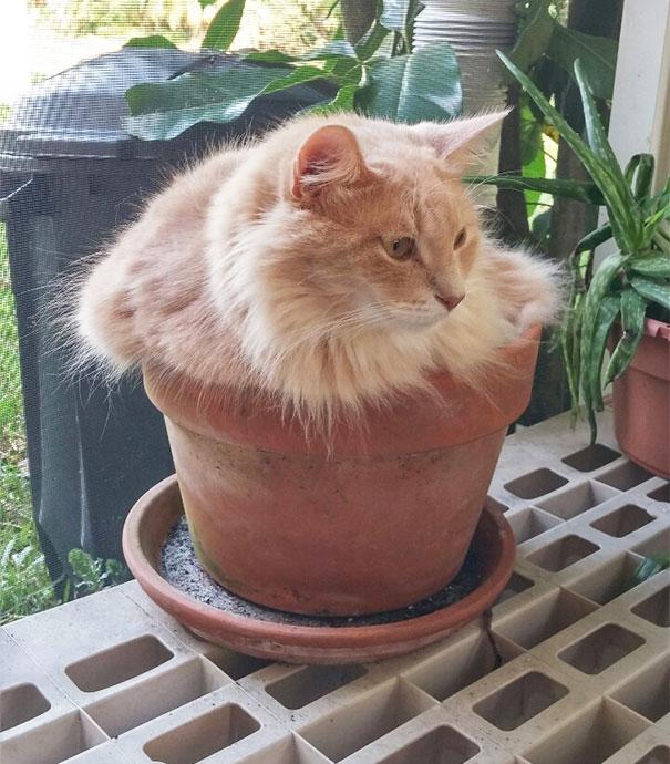 cat-in-flowerpot-3__605 (1)