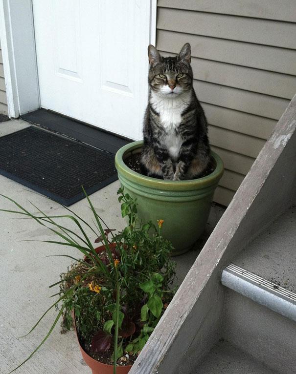 cat-in-flowerpot-8__605