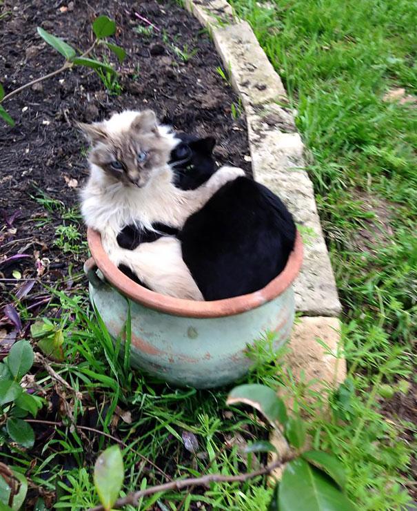 cat-plant