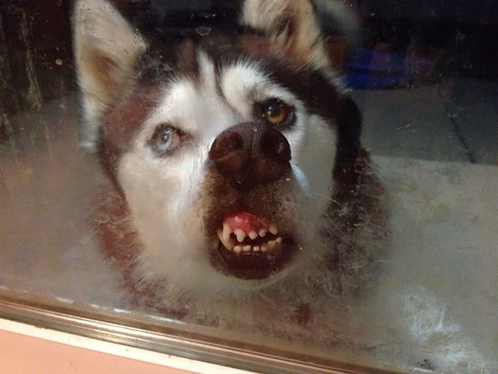 funny-animals-licking-glass-4__700