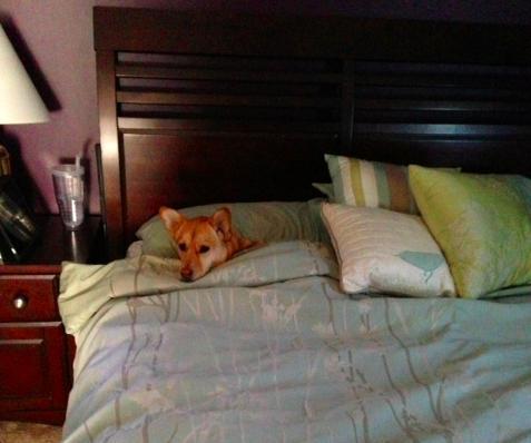 perros-cama-01
