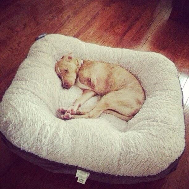perros-cama-11