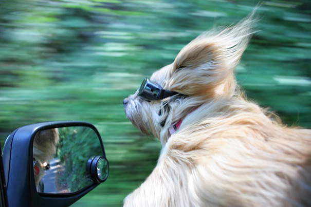 dogs-on-joyrides-19__605