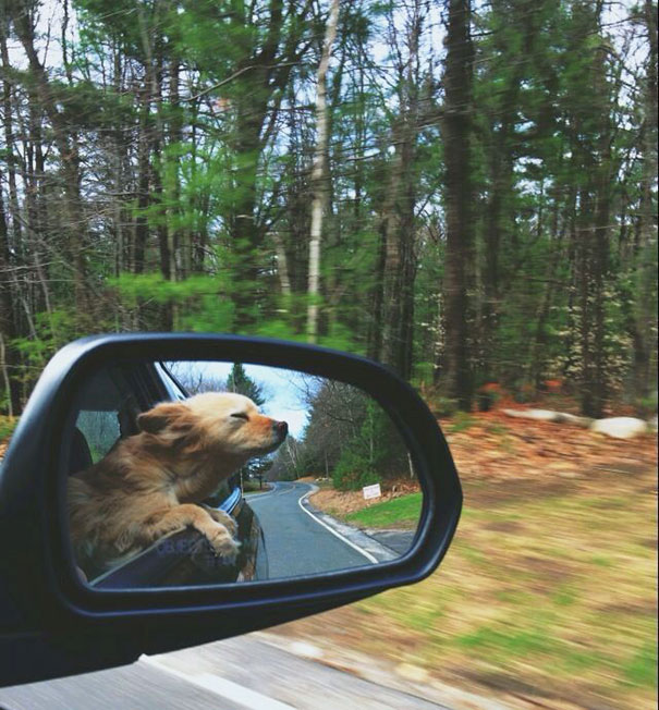 dogs-on-joyrides-25__605