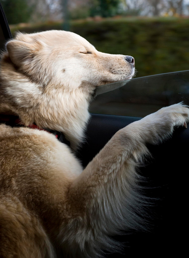 dogs-on-joyrides-35__605
