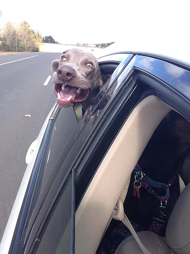 dogs-on-joyrides-8__605