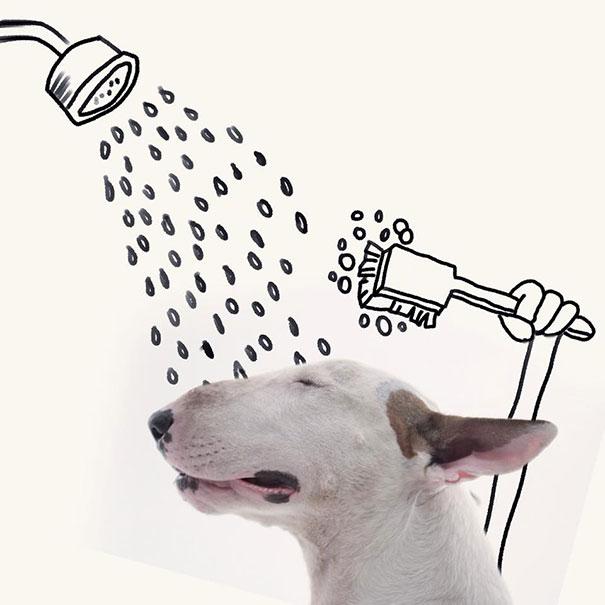 Jimmy-the-Bull-Terrier20__605