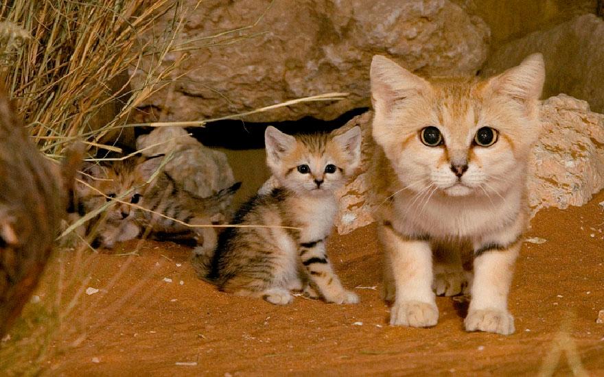 sand-cats-kittens-forever-1__880