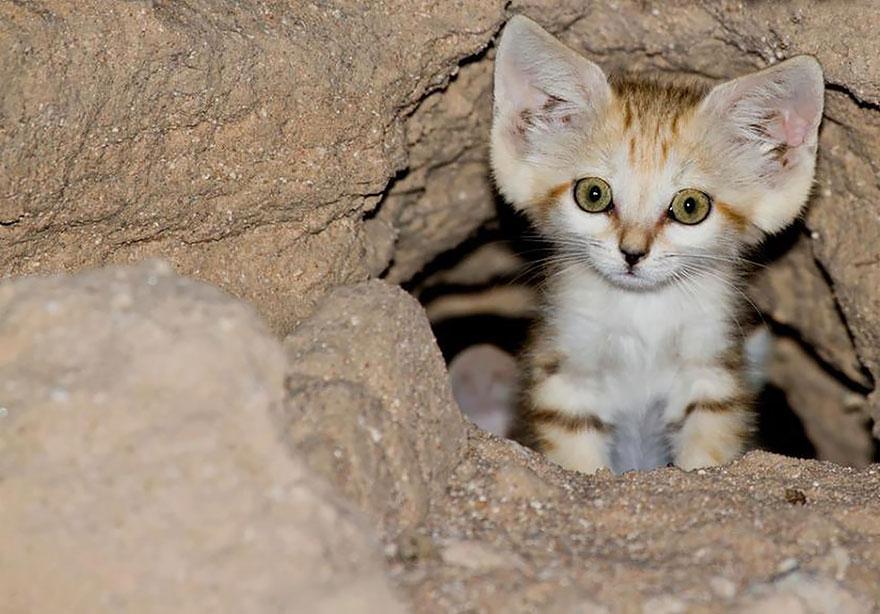 sand-cats-kittens-forever-4__880
