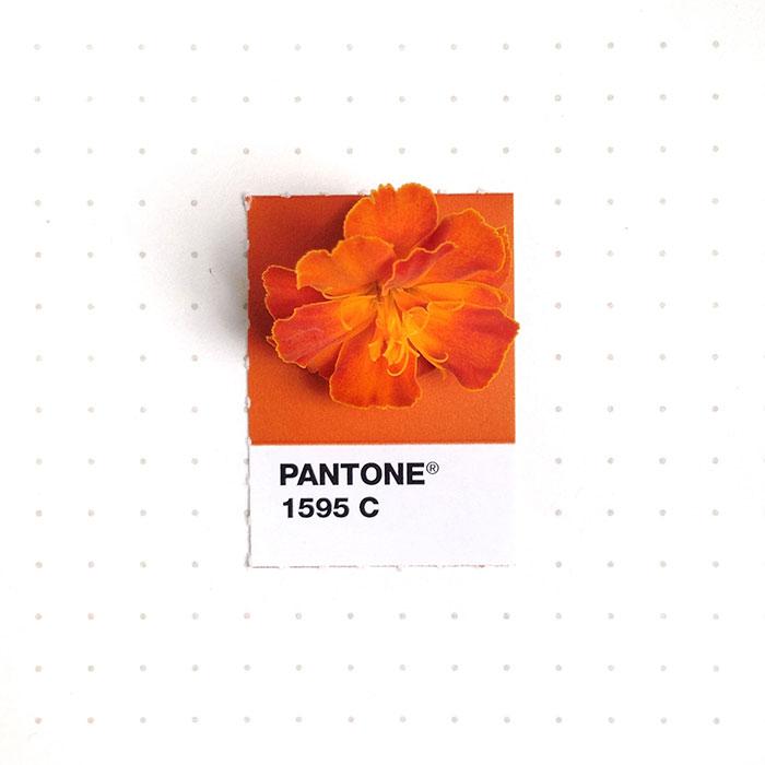 pantone-matching-system-everyday-objects-tiny-pms-project-inka-mathews-houston-texas-19