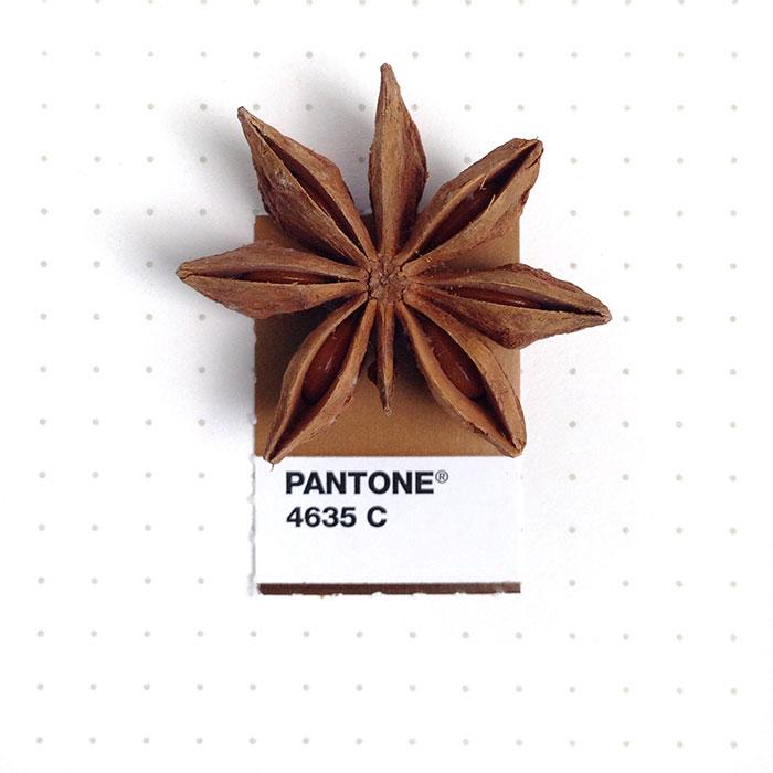 pantone-matching-system-everyday-objects-tiny-pms-project-inka-mathews-houston-texas-9