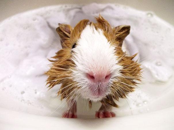 XX-animals-that-enjoys-taking-a-bath-10__605