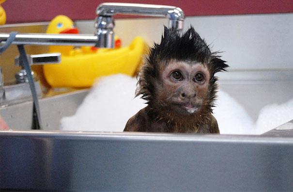 animals-taking-bath-1__605