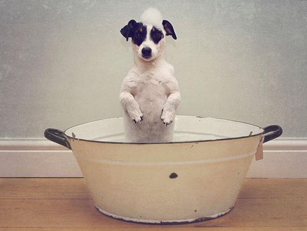 animals-taking-bath-26__605