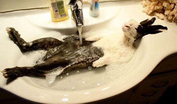 animals-taking-bath-311__605