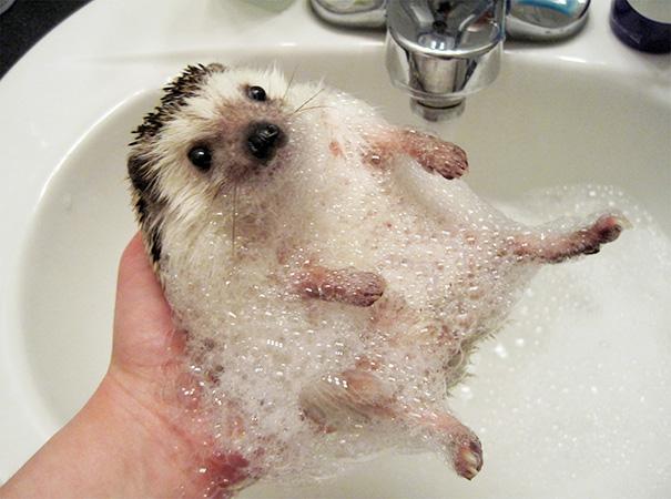 animals-taking-bath-42__605