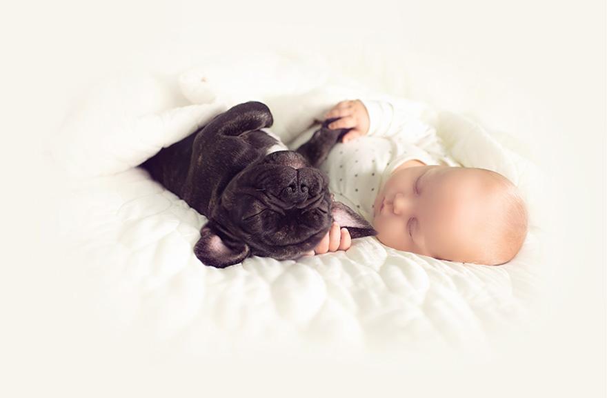 baby-dog-friendship-french-bulldog-ivette-ivens-10
