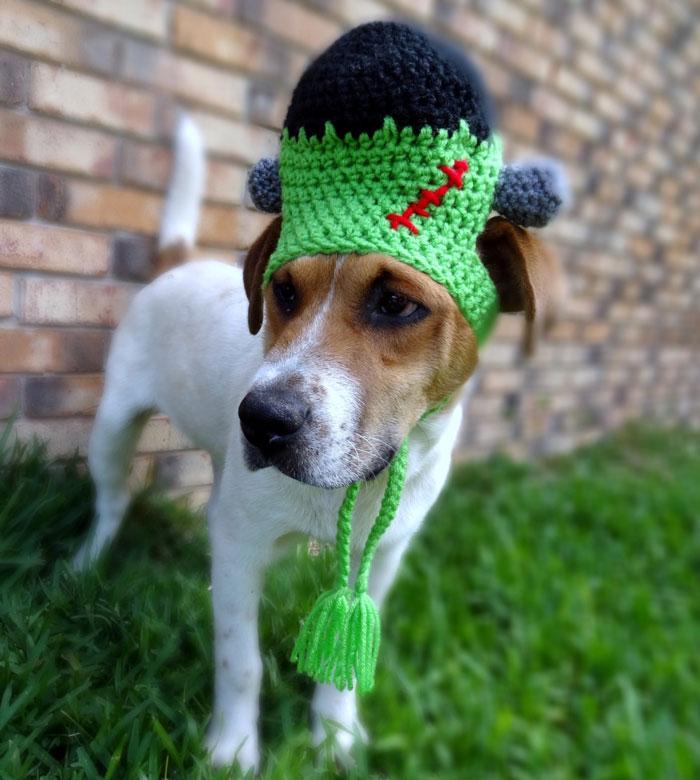 Pet-Hats__700
