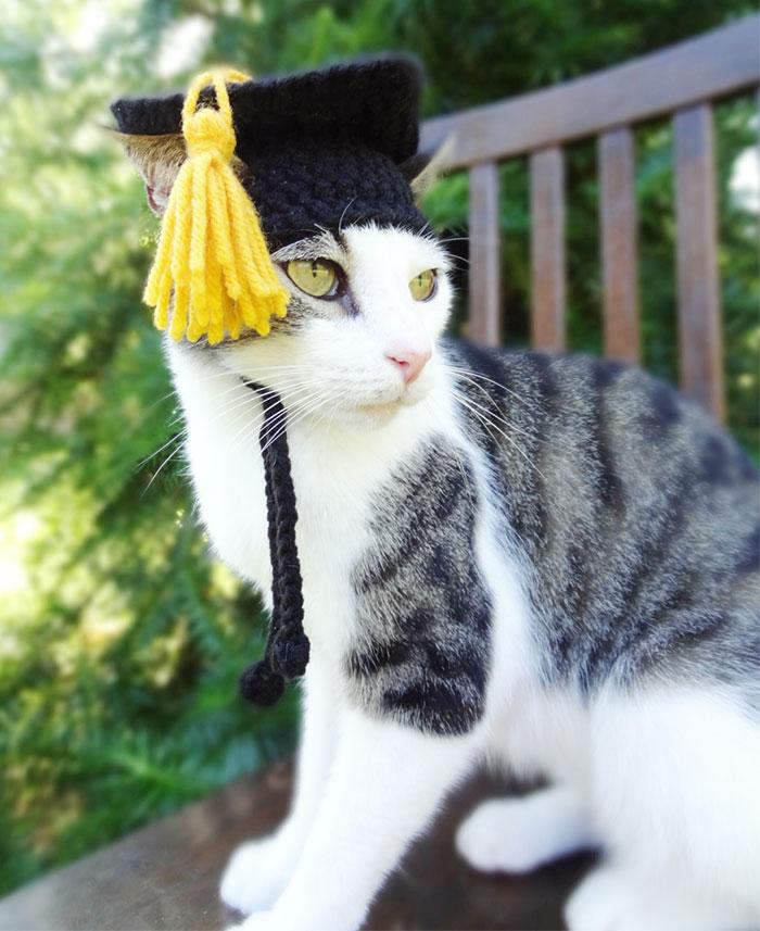 crochet-handmade-hats-pets-iheartneedlework-17__700